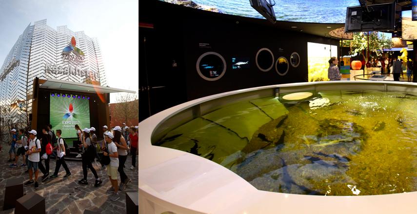greengo expo